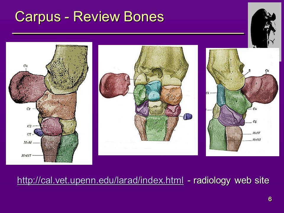 6 Carpus - Review Bones http://cal.vet.upenn.edu/larad/index.htmlhttp://cal.vet.upenn.edu/larad/index.html - radiology web site http://cal.vet.upenn.edu/larad/index.html