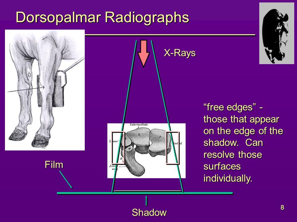 8 Dorsopalmar Radiographs Film X-Rays Shadow free edges - those that appear on the edge of the shadow.