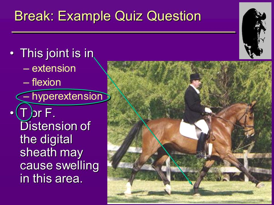 9 Break: Example Quiz Question This joint is inThis joint is in –extension –flexion –hyperextension T or F.