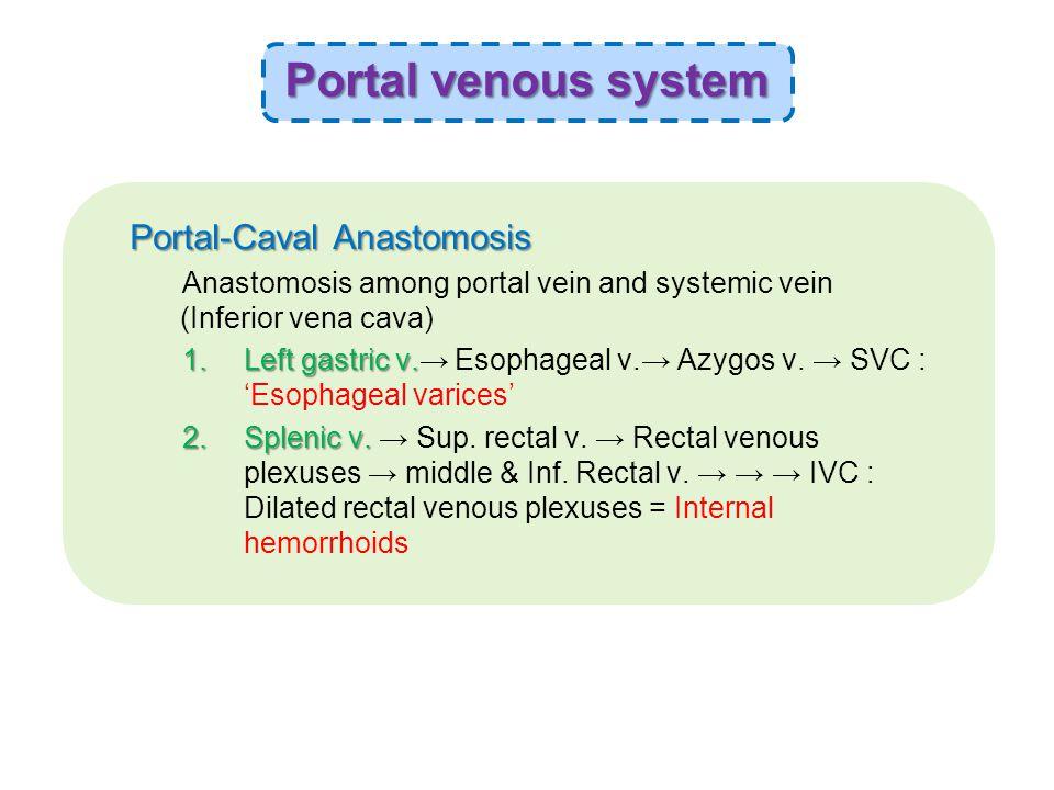 Portal-Caval Anastomosis Anastomosis among portal vein and systemic vein (Inferior vena cava) 1.Left gastric v.