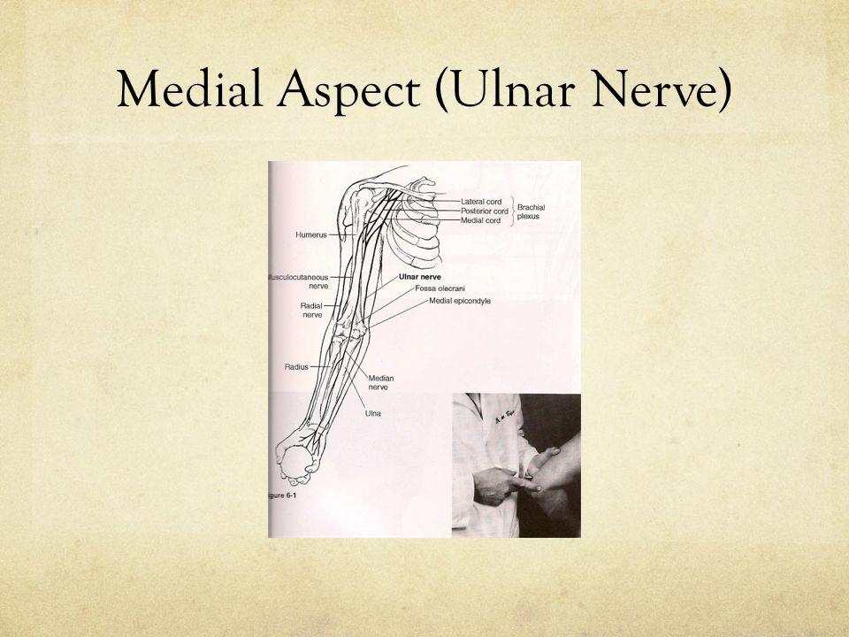 Medial Aspect (Ulnar Nerve)