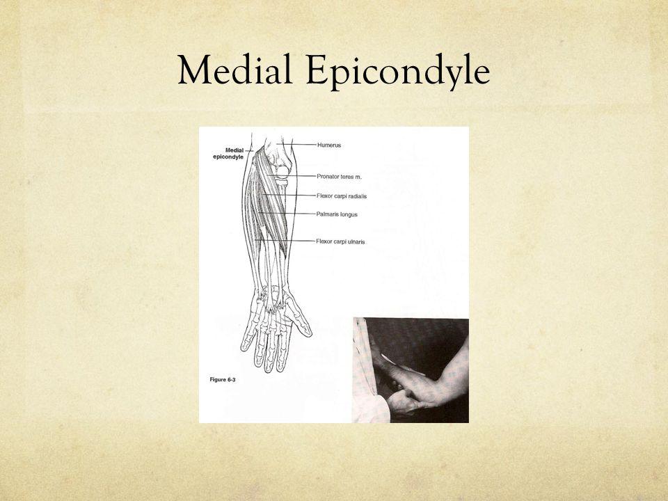Medial Epicondyle