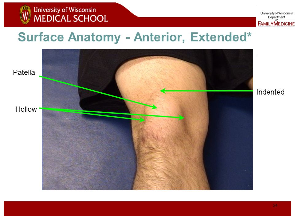25 Normal Knee – Anterior, Flexed
