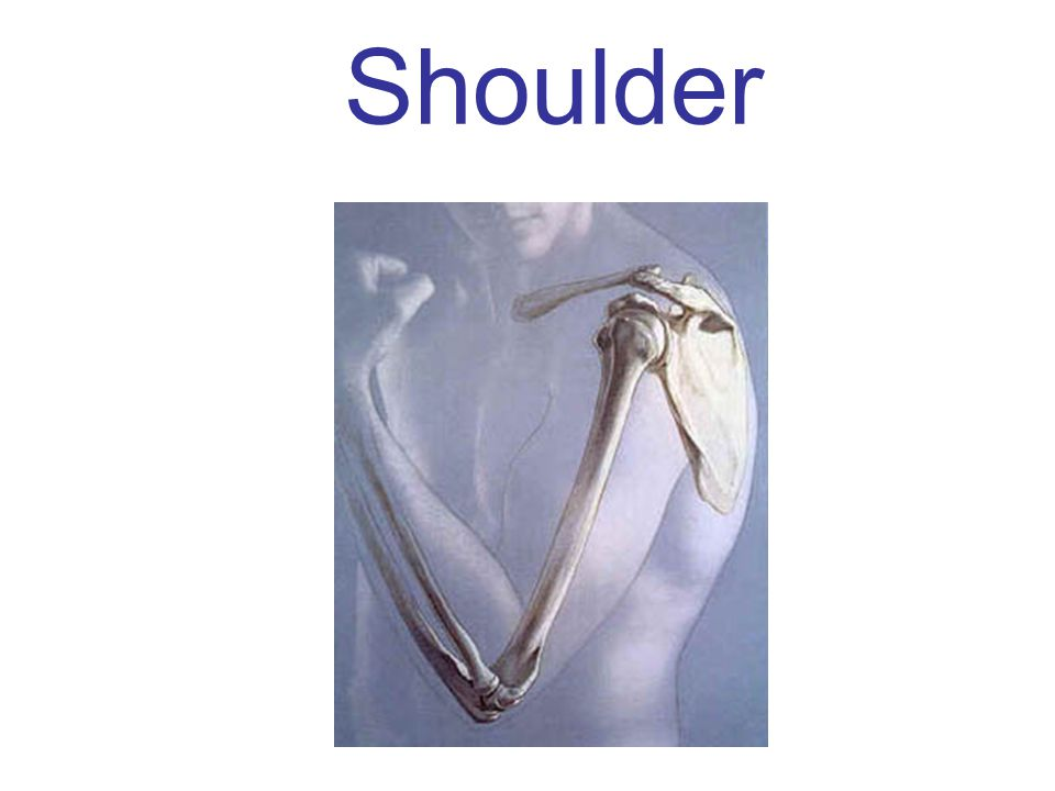 Movements allowed by the Shoulder Glenohumeral Joint: Flexion + Extension ADduction + Abduction Circumduction: Flexion + Extension + Adduction + Abduction Medial Rotation + Lateral Rotation Horizontal ABduction + Horizontal ADduction