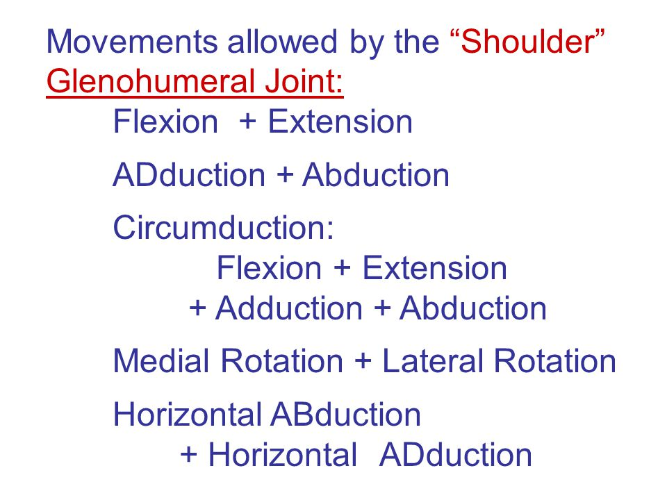 "Movements allowed by the ""Shoulder"" Glenohumeral Joint: Flexion + Extension ADduction + Abduction Circumduction: Flexion + Extension + Adduction + Abd"
