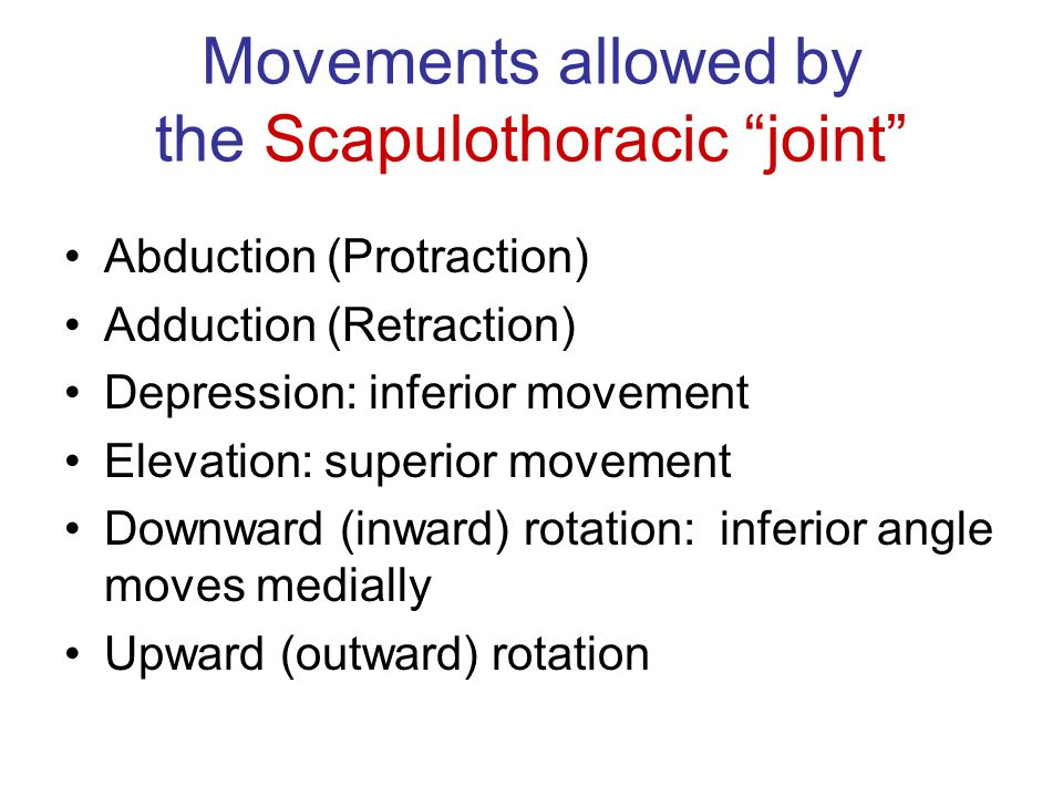 "Movements allowed by the Scapulothoracic ""joint"" Abduction (Protraction) Adduction (Retraction) Depression: inferior movement Elevation: superior move"