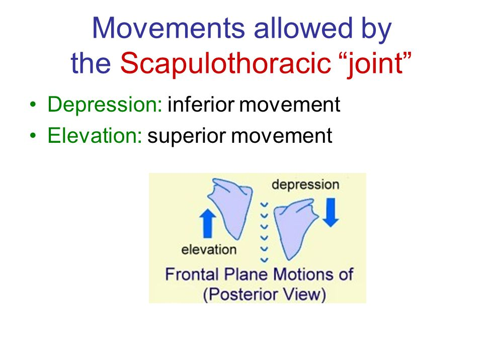 "Movements allowed by the Scapulothoracic ""joint"" Depression: inferior movement Elevation: superior movement"