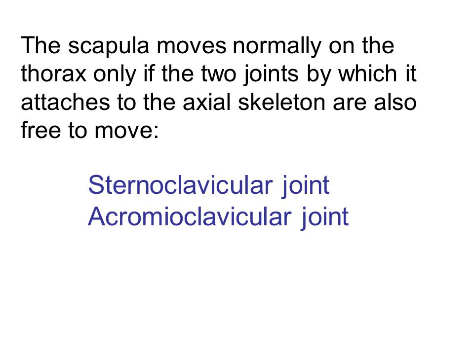 The scapula moves normally on the thorax only if the two joints by which it attaches to the axial skeleton are also free to move: Sternoclavicular joi