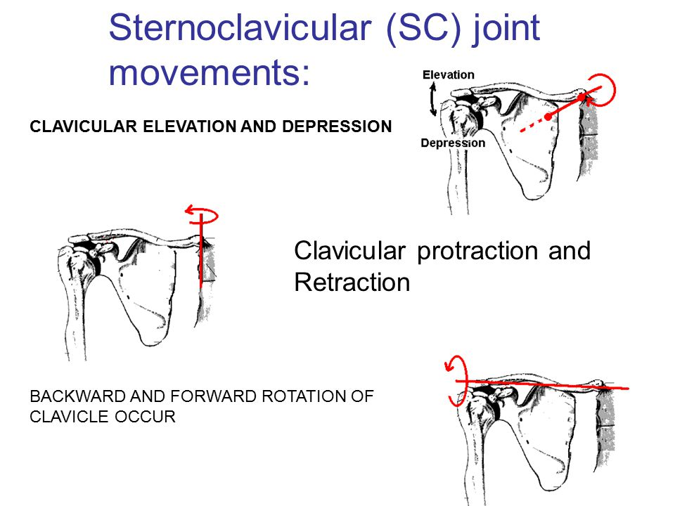 Clavicular protraction and Retraction CLAVICULAR ELEVATION AND DEPRESSION BACKWARD AND FORWARD ROTATION OF CLAVICLE OCCUR Sternoclavicular (SC) joint