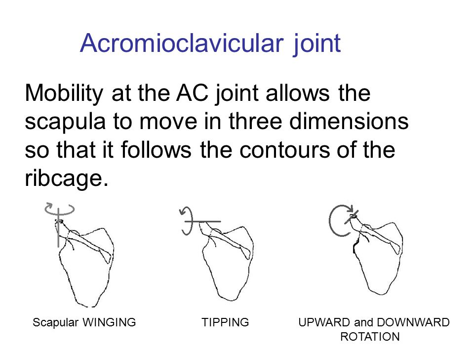 Mobility at the AC joint allows the scapula to move in three dimensions so that it follows the contours of the ribcage. Acromioclavicular joint Scapul