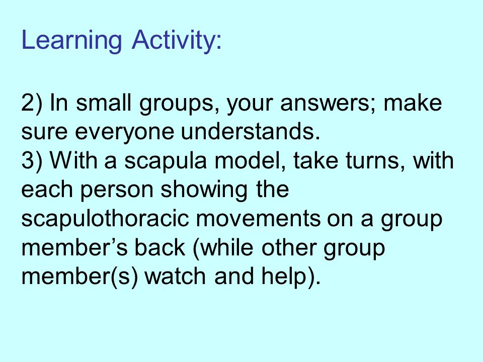 Learning Activity: 2) In small groups, your answers; make sure everyone understands. 3) With a scapula model, take turns, with each person showing the