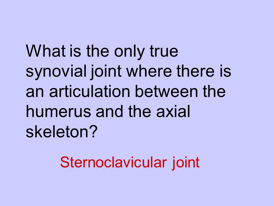 Movements allowed by the Scapulothoracic joint Downward (inward) rotation: inferior angle moves medially, and acromion moves downward Upward (outward) rotation: inferior angle moves laterally, and acromion moves upward