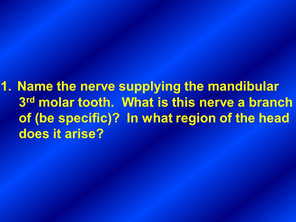 1.Name the nerve supplying the mandibular 3 rd molar tooth. What is this nerve a branch of (be specific)? In what region of the head does it arise?