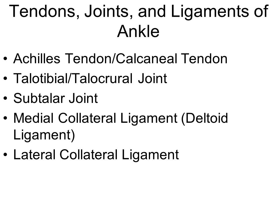 Tendons, Joints, and Ligaments of Ankle Achilles Tendon/Calcaneal Tendon Talotibial/Talocrural Joint Subtalar Joint Medial Collateral Ligament (Deltoid Ligament) Lateral Collateral Ligament