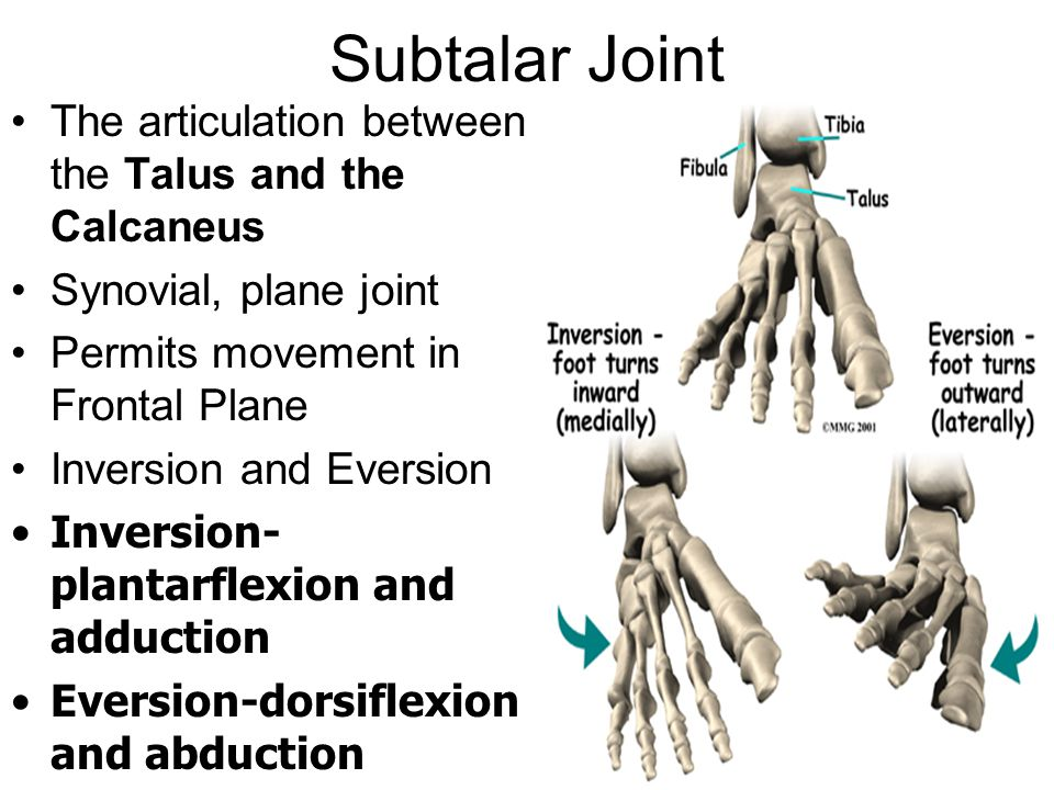 Subtalar Joint The articulation between the Talus and the Calcaneus Synovial, plane joint Permits movement in Frontal Plane Inversion and Eversion Inversion- plantarflexion and adduction Eversion-dorsiflexion and abduction