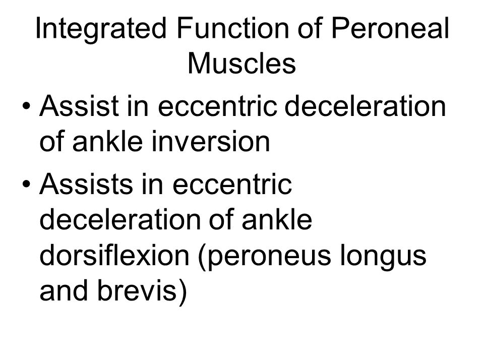 Integrated Function of Peroneal Muscles Assist in eccentric deceleration of ankle inversion Assists in eccentric deceleration of ankle dorsiflexion (peroneus longus and brevis)