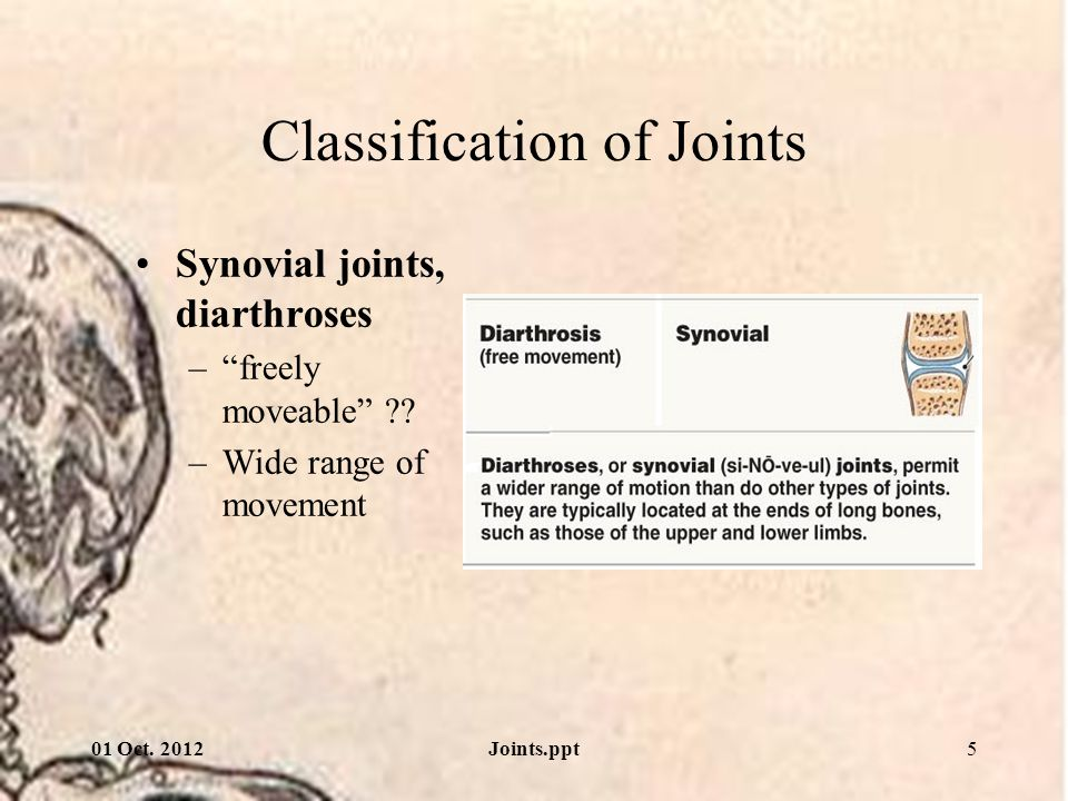 01 Oct. 2012Joints.ppt16 Directions of angular movement Rotation –Medial or lateral rotation