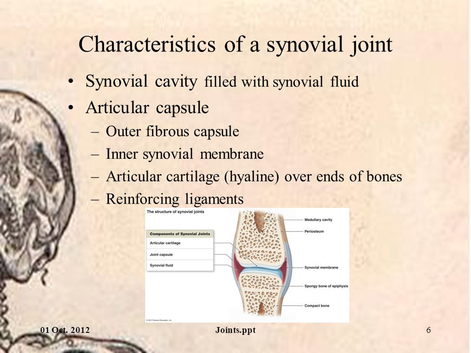 01 Oct. 2012Joints.ppt17 Directions of angular movement Pronation, Supination