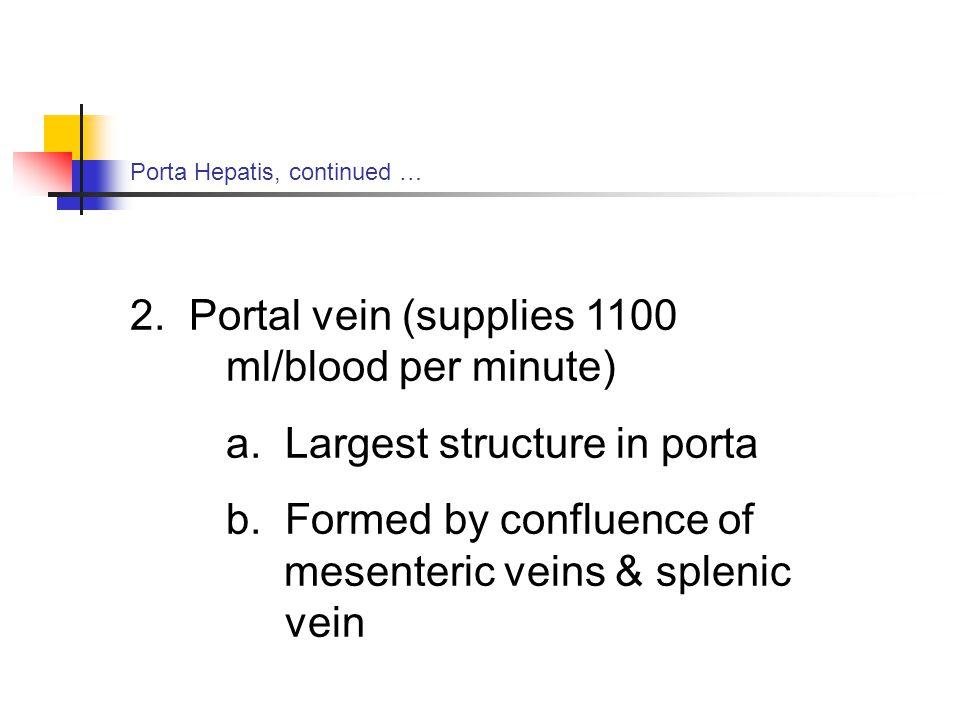 Porta Hepatis, continued … 2.Portal vein (supplies 1100 ml/blood per minute) a.