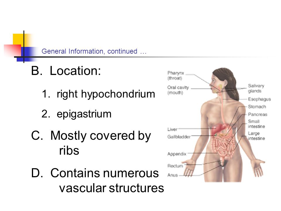 General Information, continued … B.Location: 1. right hypochondrium 2.