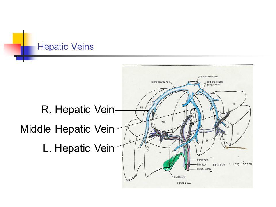 Hepatic Veins R. Hepatic Vein Middle Hepatic Vein L. Hepatic Vein