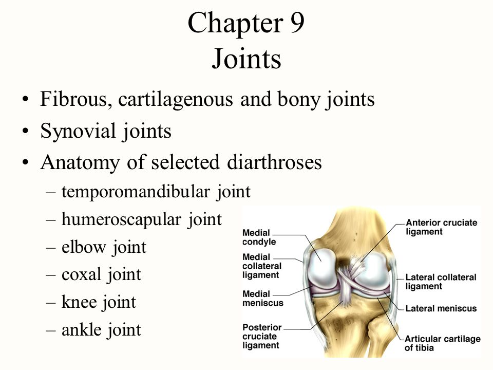Chapter 9 Joints Fibrous, cartilagenous and bony joints Synovial joints Anatomy of selected diarthroses –temporomandibular joint –humeroscapular joint