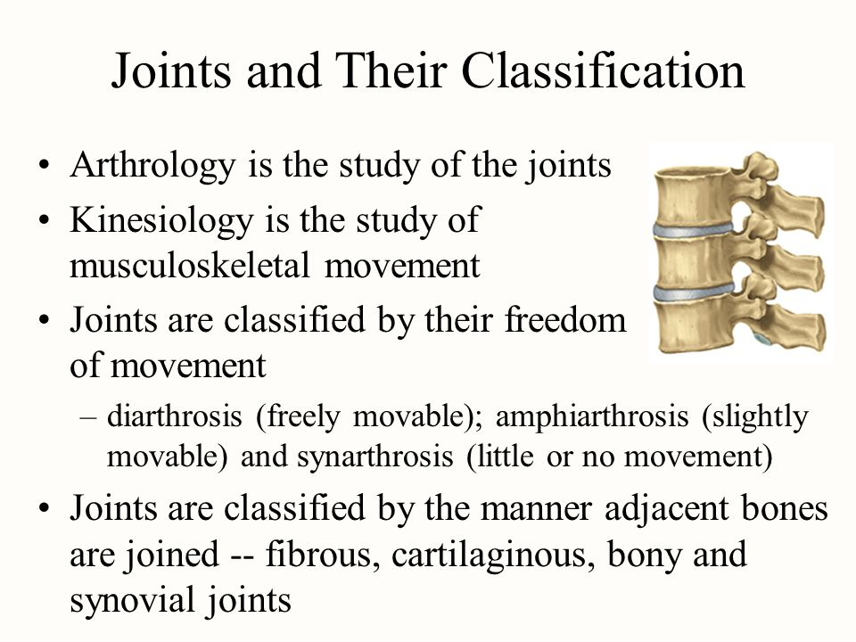 Joints and Their Classification Arthrology is the study of the joints Kinesiology is the study of musculoskeletal movement Joints are classified by th