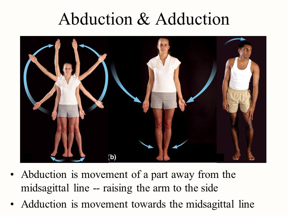 Abduction & Adduction Abduction is movement of a part away from the midsagittal line -- raising the arm to the side Adduction is movement towards the