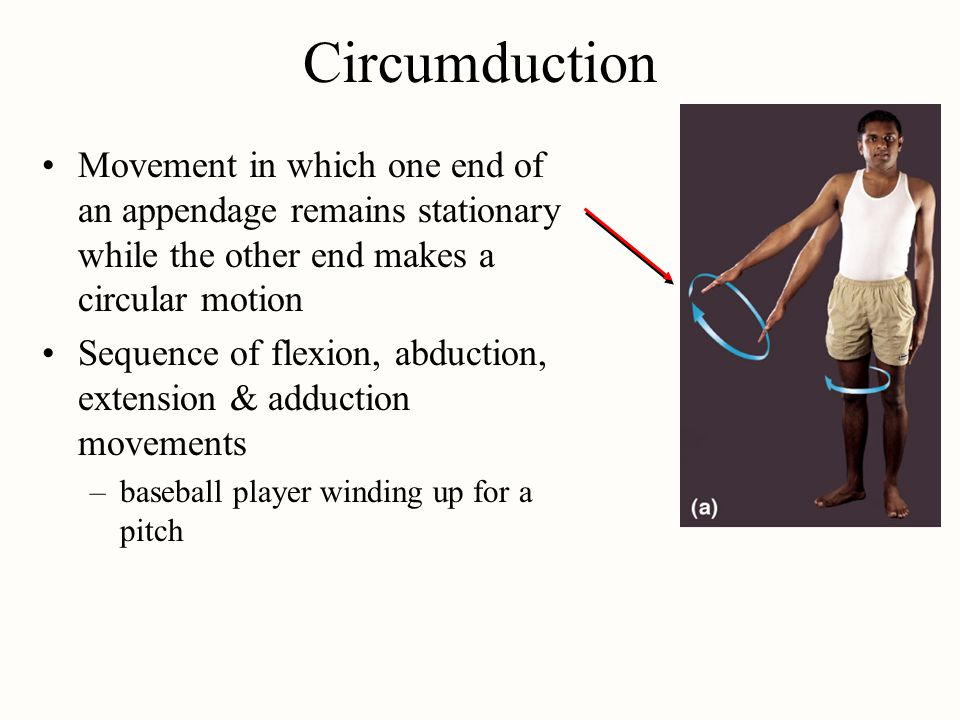 Circumduction Movement in which one end of an appendage remains stationary while the other end makes a circular motion Sequence of flexion, abduction,