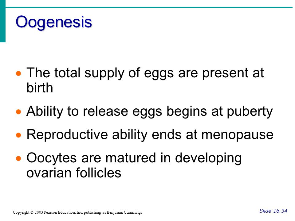 Oogenesis Slide 16.34 Copyright © 2003 Pearson Education, Inc. publishing as Benjamin Cummings  The total supply of eggs are present at birth  Abili