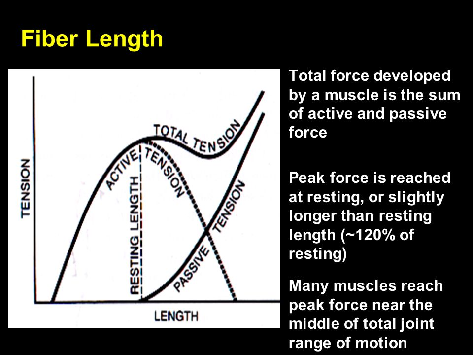 Total force developed by a muscle is the sum of active and passive force Peak force is reached at resting, or slightly longer than resting length (~12
