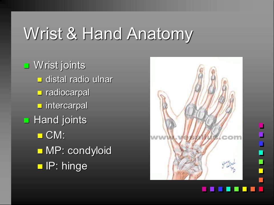 Forearm injuries n Ulnar variance: relative length of ulna and radius n Determined n genetics n elbow pathology n mechanical loading n Ulnar variance