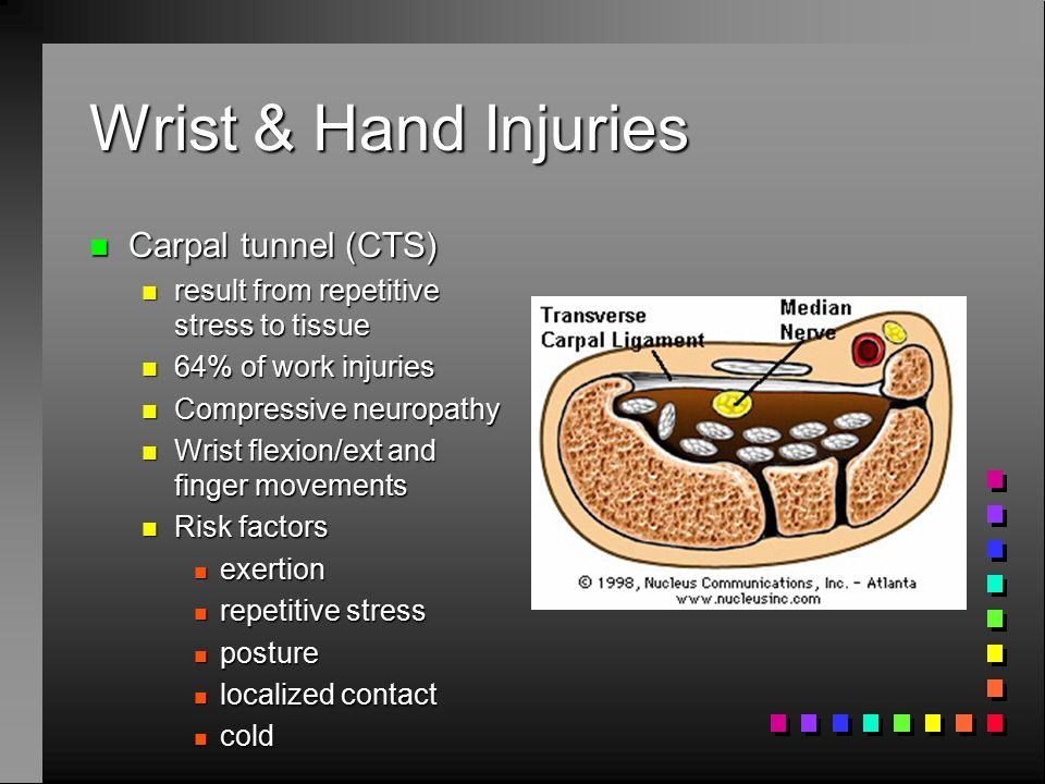 Wrist & Hand Anatomy n Strong ligaments n Muscles n control wrist & finger motion n carpal tunnels n Flexor & extensor retinacula