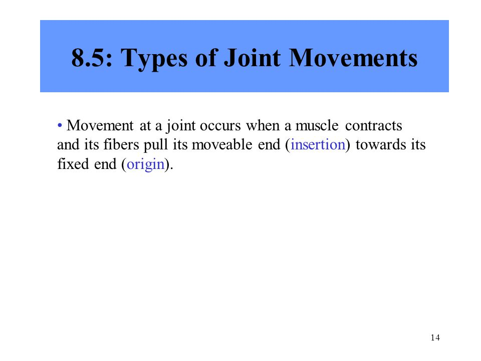 14 8.5: Types of Joint Movements Movement at a joint occurs when a muscle contracts and its fibers pull its moveable end (insertion) towards its fixed end (origin).