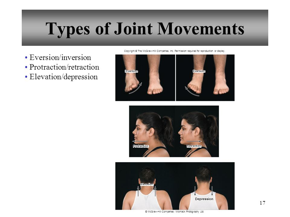 17 Types of Joint Movements Eversion/inversion Protraction/retraction Elevation/depression Copyright © The McGraw-Hill Companies, Inc.