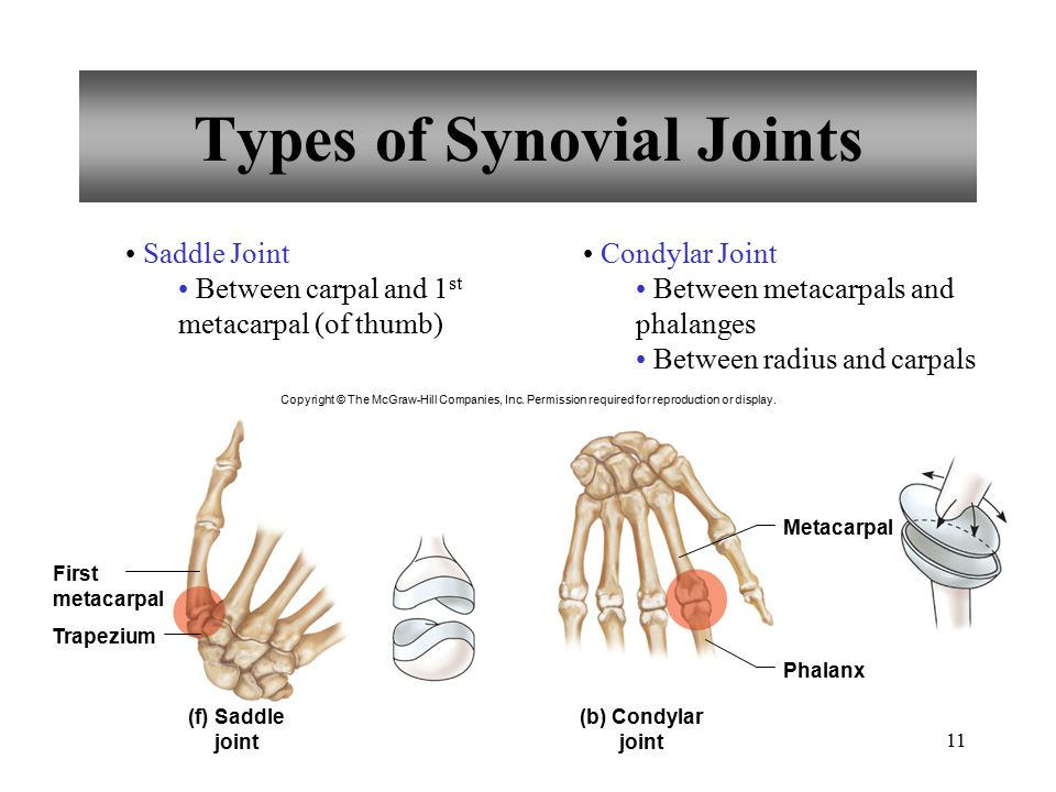 11 Types of Synovial Joints Saddle Joint Between carpal and 1 st metacarpal (of thumb) Condylar Joint Between metacarpals and phalanges Between radius
