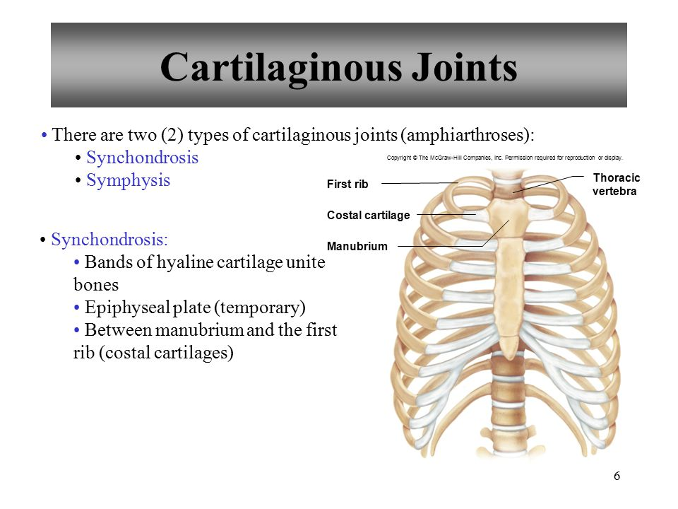 6 Cartilaginous Joints There are two (2) types of cartilaginous joints (amphiarthroses): Synchondrosis Symphysis Synchondrosis: Bands of hyaline carti
