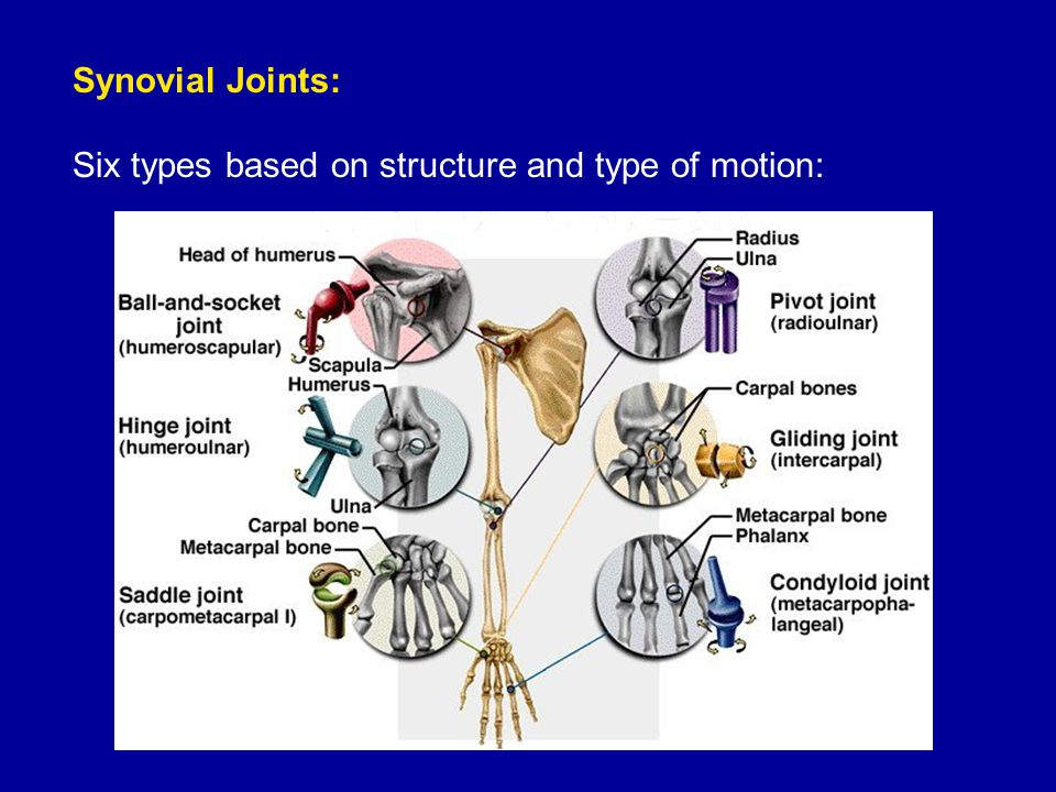 Synovial Joints: Six types based on structure and type of motion: