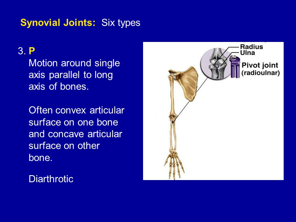 Synovial Joints: Six types 3. P Motion around single axis parallel to long axis of bones.