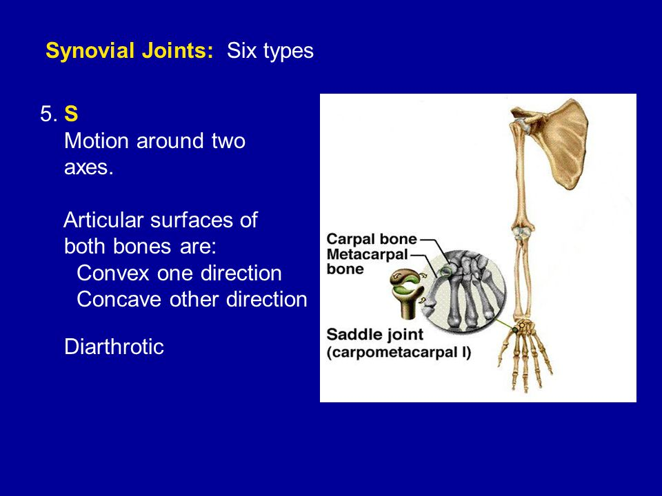 Synovial Joints: Six types 5. S Motion around two axes.