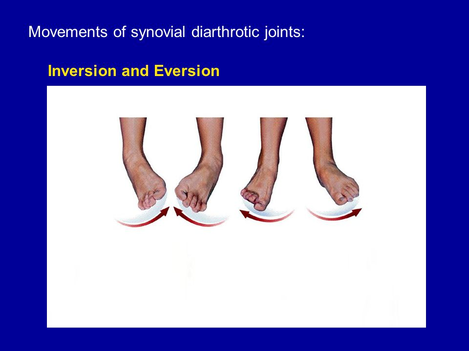 Movements of synovial diarthrotic joints: Inversion and Eversion