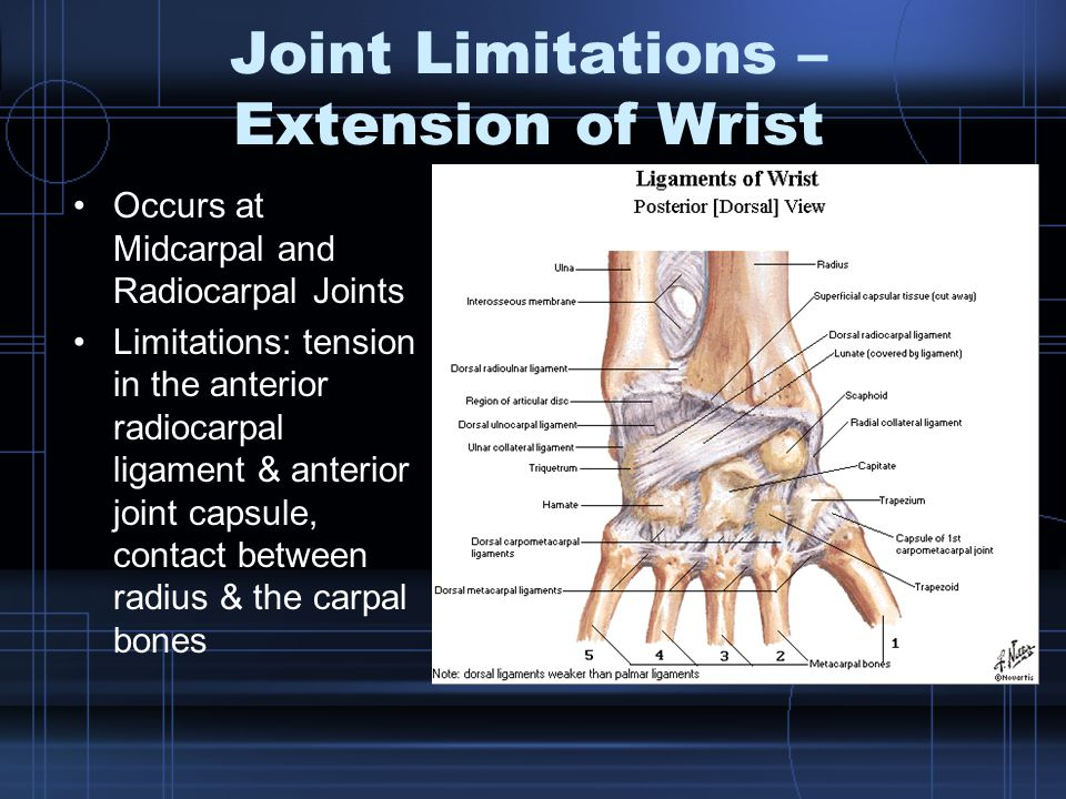 Joint Limitations – Extension of Wrist Occurs at Midcarpal and Radiocarpal Joints Limitations: tension in the anterior radiocarpal ligament & anterior joint capsule, contact between radius & the carpal bones