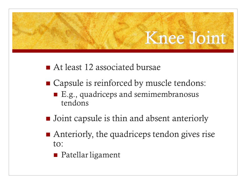 Knee Joint At least 12 associated bursae Capsule is reinforced by muscle tendons: E.g., quadriceps and semimembranosus tendons Joint capsule is thin a