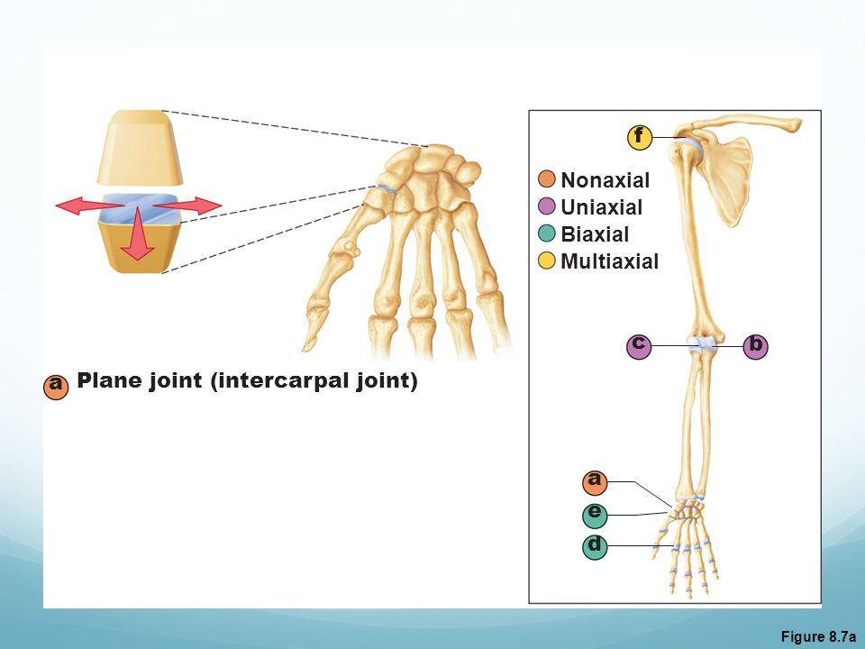 Figure 8.7a a b c d e f Nonaxial Uniaxial Biaxial Multiaxial a Plane joint (intercarpal joint)
