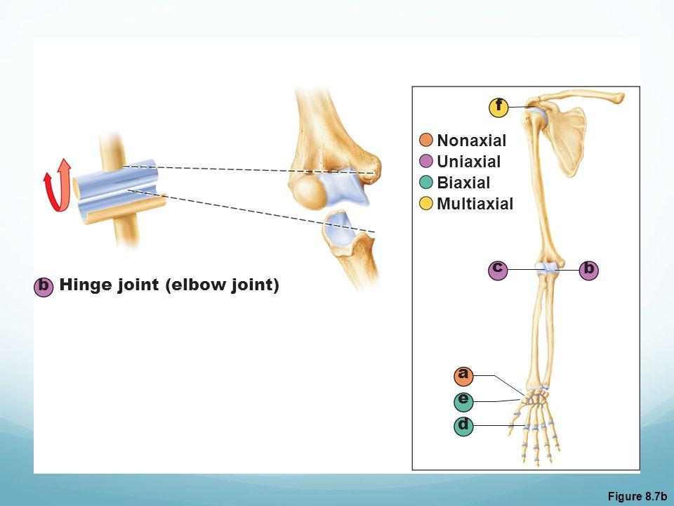 Figure 8.7b b Hinge joint (elbow joint) a b c d e f Nonaxial Uniaxial Biaxial Multiaxial