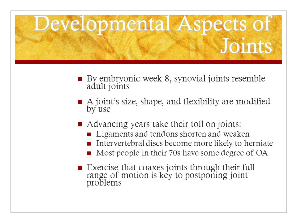 Developmental Aspects of Joints By embryonic week 8, synovial joints resemble adult joints A joint's size, shape, and flexibility are modified by use