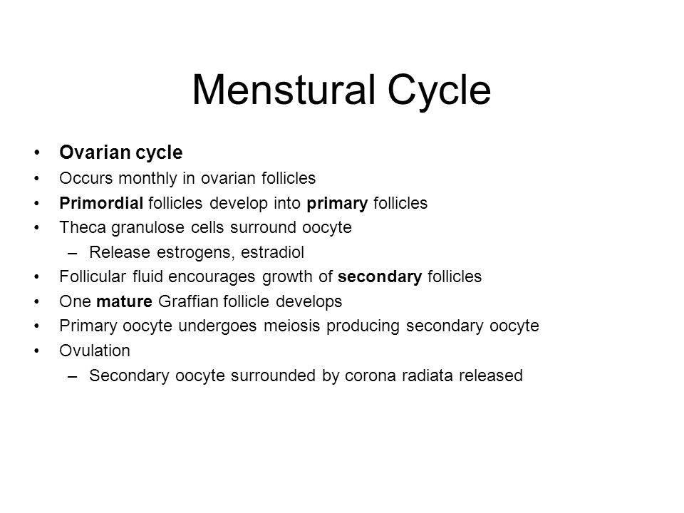 Ovarian cycle Occurs monthly in ovarian follicles Primordial follicles develop into primary follicles Theca granulose cells surround oocyte –Release estrogens, estradiol Follicular fluid encourages growth of secondary follicles One mature Graffian follicle develops Primary oocyte undergoes meiosis producing secondary oocyte Ovulation –Secondary oocyte surrounded by corona radiata released Menstural Cycle