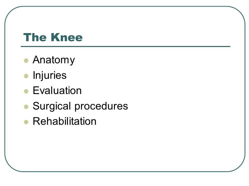 Anatomy Injuries Evaluation Surgical procedures Rehabilitation