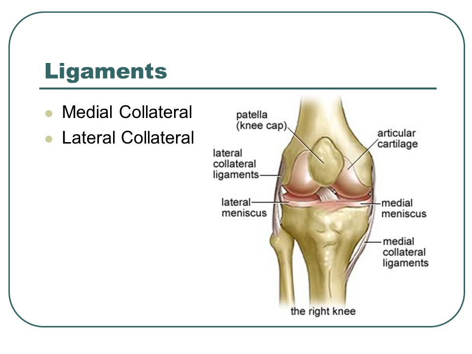 Ligaments Medial Collateral Lateral Collateral