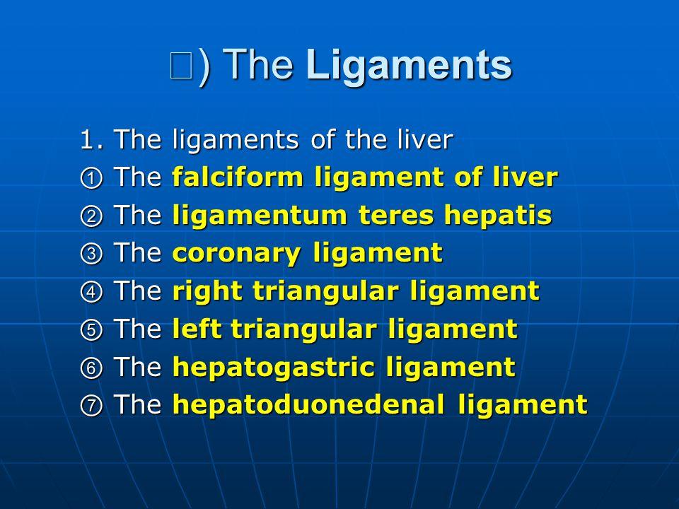 Ⅲ ) The Ligaments 1. The ligaments of the liver 1. The ligaments of the liver ① The falciform ligament of liver ① The falciform ligament of liver ② Th